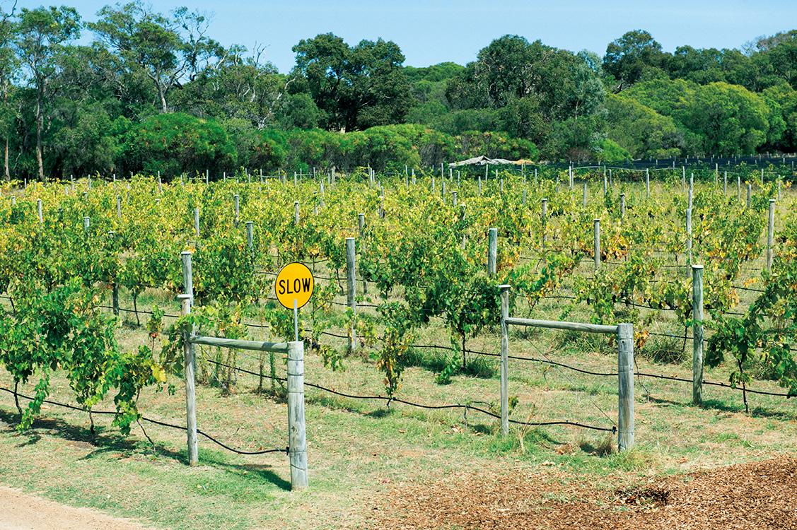 ワインの一大産地であるマーガレットリバー