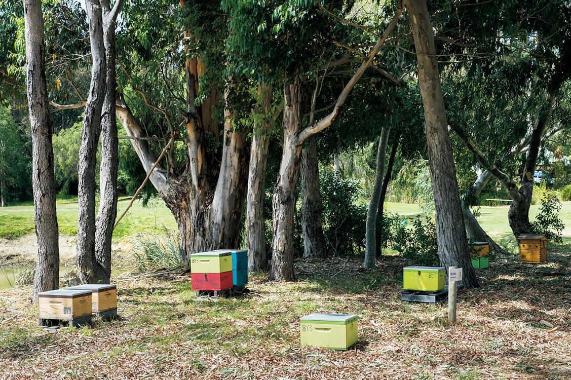 マーガレットリバーのワイナリー〈Barnyard1978〉。ブドウ畑の間を鶏が行き交い、裏庭ではカラフルな巣箱で養蜂を営んでいる。平日はランチのみだが、週末には朝食も。 http://www.barnyard1978.com.au