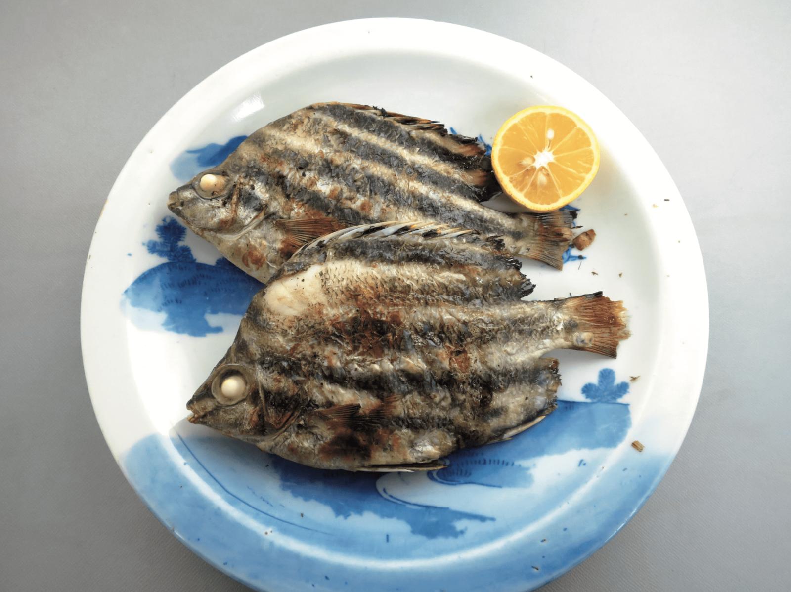カゴカキダイ 魚 ブルータス