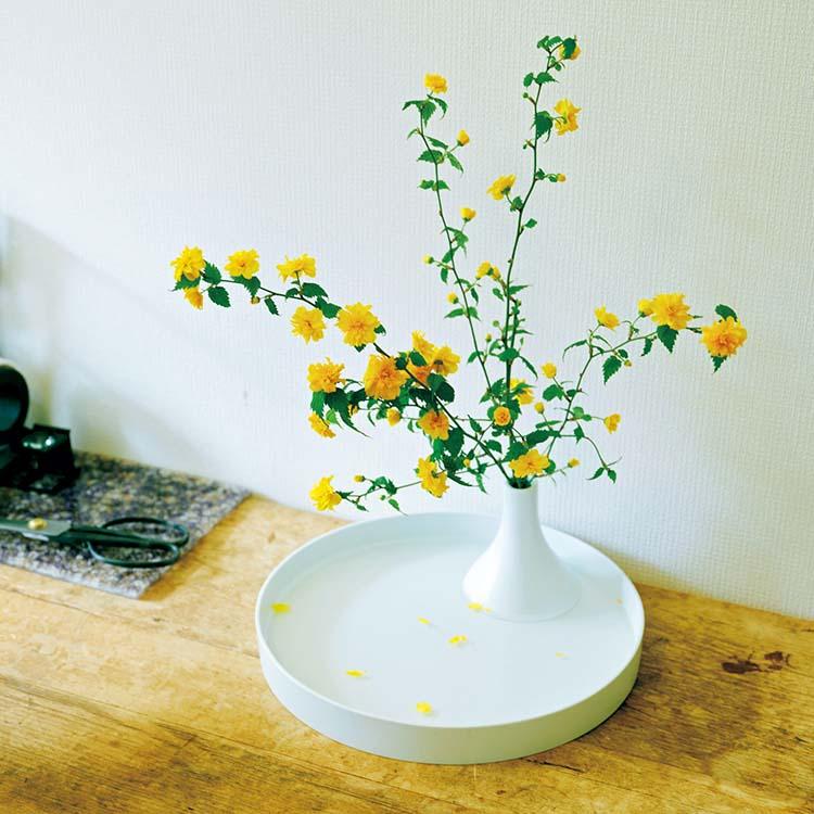森永邦彦が好きな花