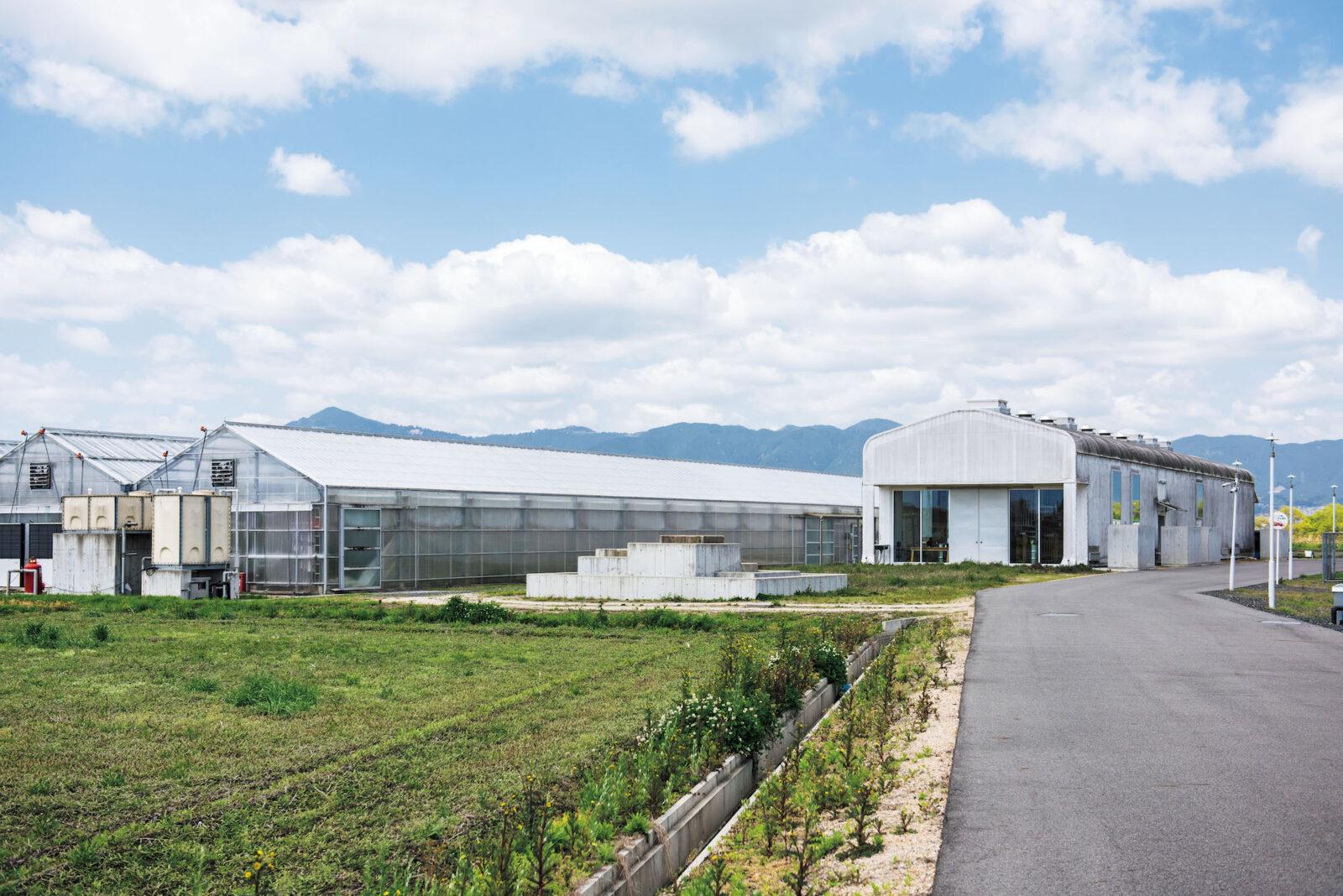 約4ヘクタールの広大な土地を生かし、無肥料、無農薬の露地栽培で食用バラも生産。