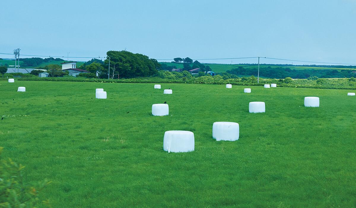 現代アートのようだが、牧草を発酵中。