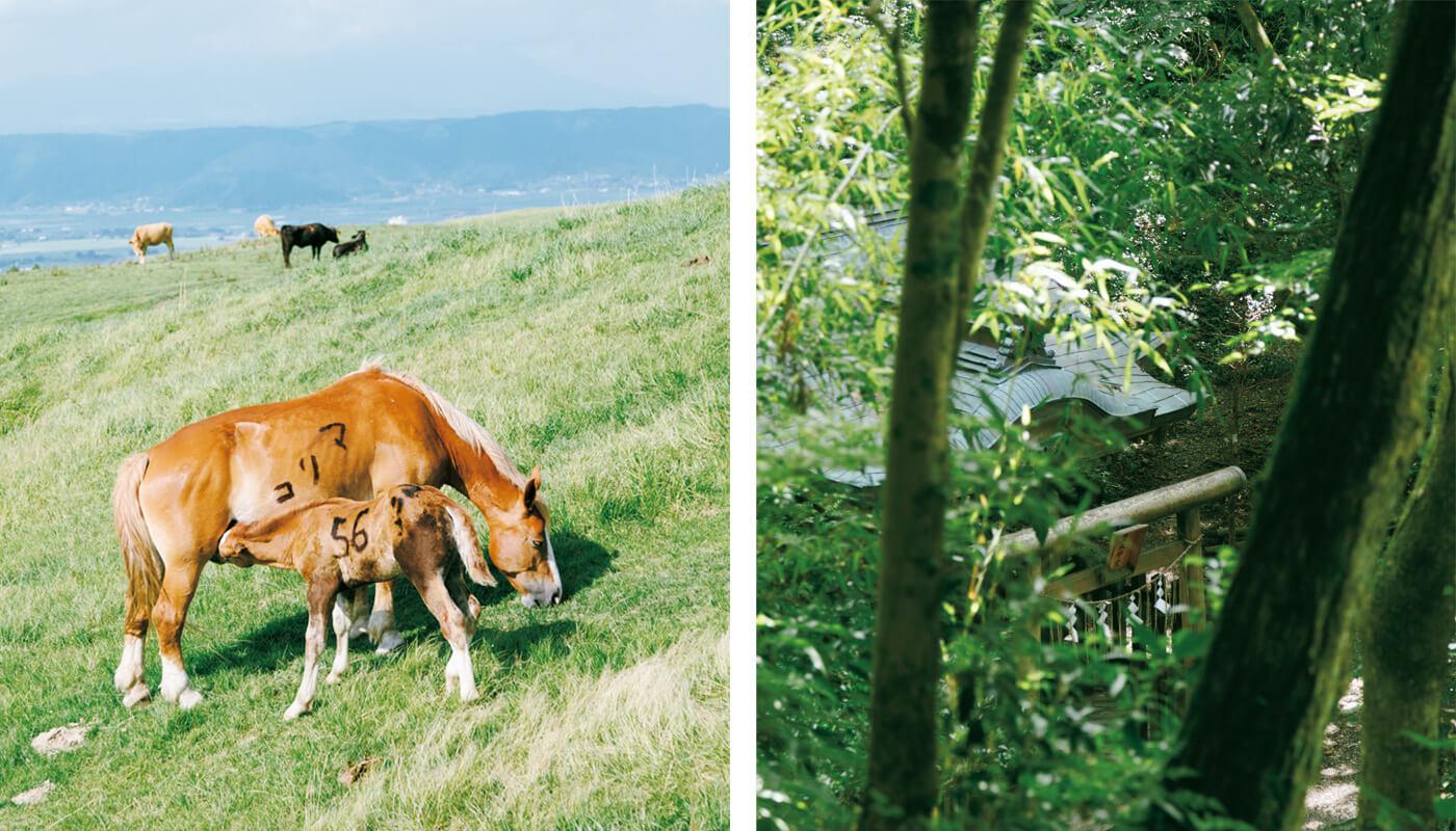 (左)阿蘇といえばこの光景。中岳火口に向かう草千里ヶ浜で、のんびり草を食む馬の親子。(右)幣立神宮の裏手にひっそりと佇む東水神宮。分水嶺に鎮座し、湧き出づる御神水は五ヶ瀬川の源流の一つ。手前には八大龍王が鎮められたとされる水玉池が。高千穂の聖なる水際。住所:上益城郡山都町大野712 | 地図