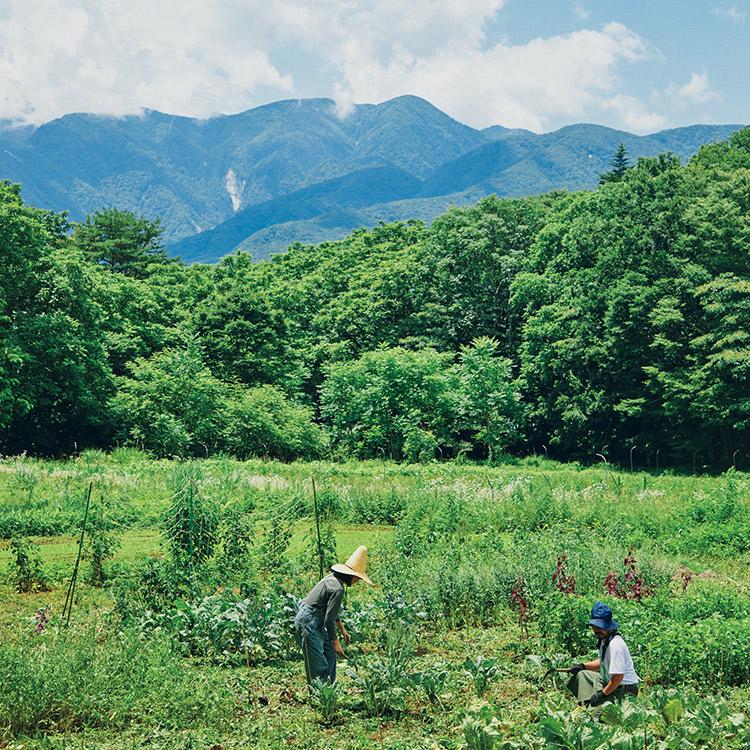 瀬川誠人が山梨で農業