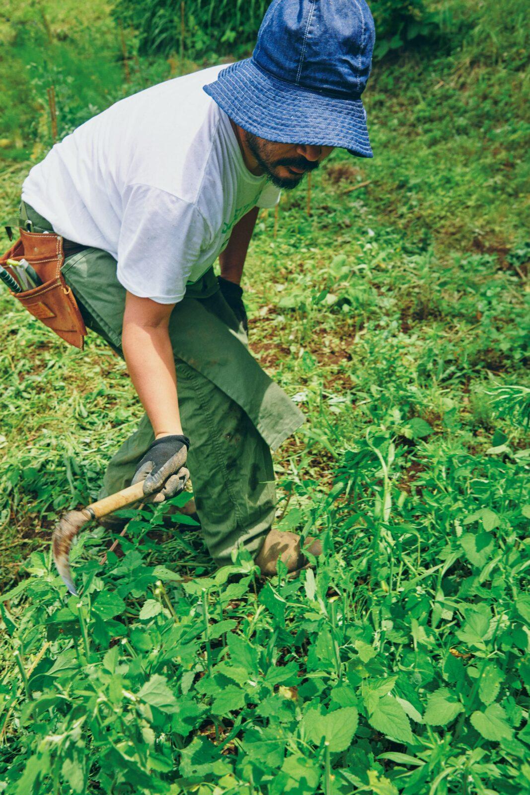 """通常の畑仕事に必要なのは雑草を刈る""""ノコ鎌""""一本。瀬川さんは山梨〈野風草〉の舘野昌也さんに自然農を学んだ。"""