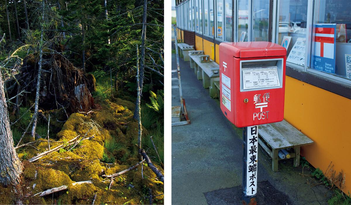 (左)春国岱の第3砂丘にはアカエゾマツなどの巨木が生い茂り、地上は苔で覆われている。(右)納沙布岬にあった、日本最東端郵便ポスト。