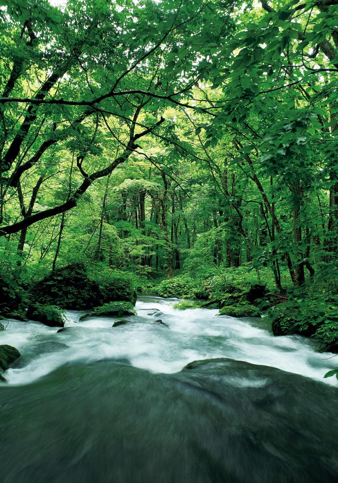 約14㎞にわたって続く奥入瀬渓流