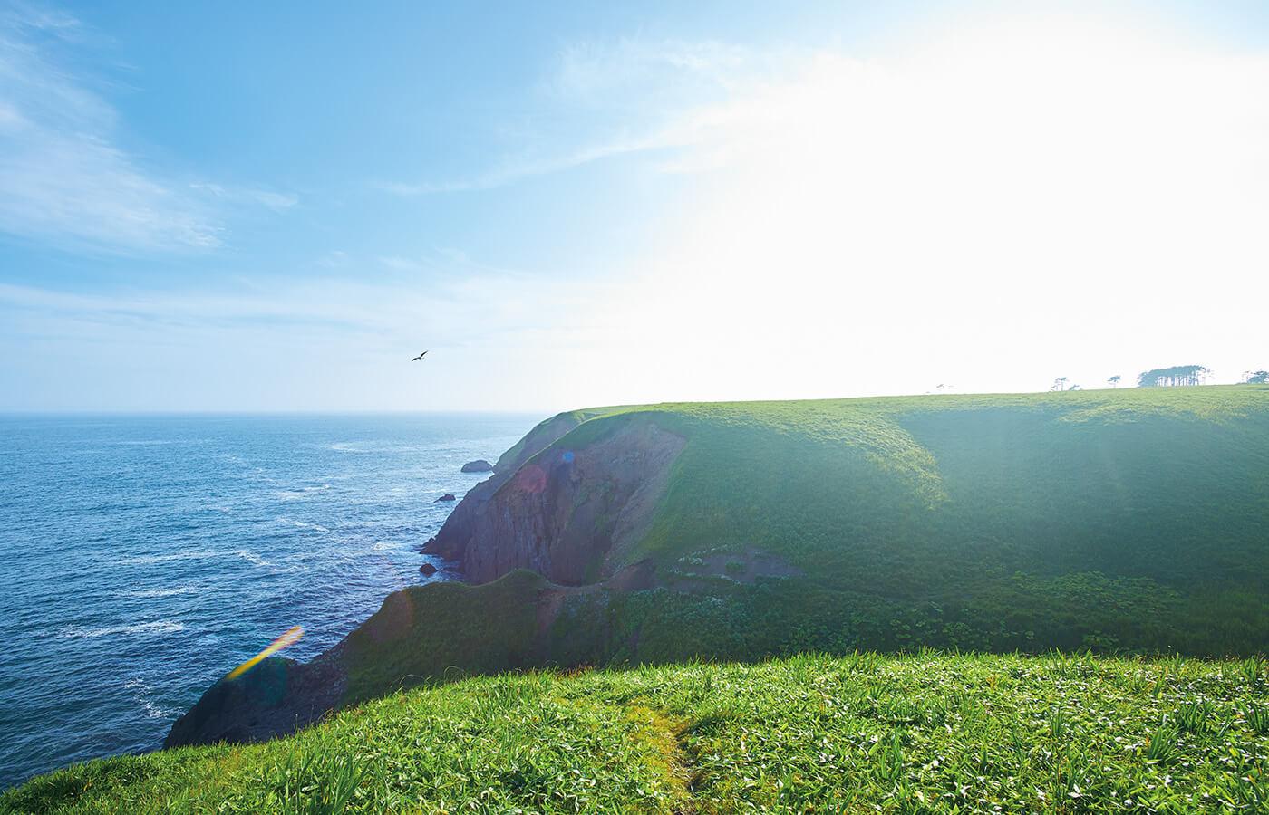 エゾアカマツの森を抜けると大草原が広がる、落石岬の絶景。海抜40mの断崖絶壁で、アイルランドやイングランドの光景ともどこか似る。周辺の小径散策も可能。時間帯により、周辺に棲むエゾシカとも間近に出会える。
