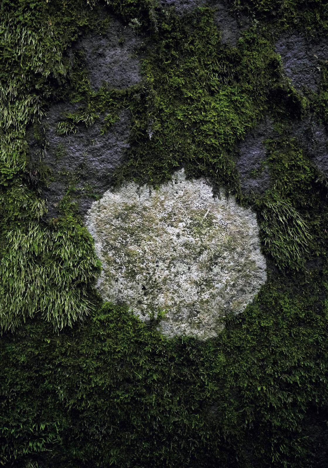 苔の絨毯の上に1ヵ所だけ、直径15㎝ほどのぽっかりとした隙間を発見。実はこの部分にだけ地衣類が自生しており、苔との熾烈な領地争いを繰り広げているという。