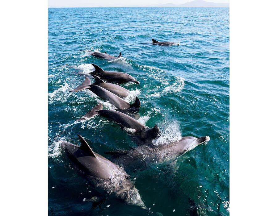天草の近海には約200頭のミナミハンドウイルカが生息。二江港からイルカウォッチングの船も出ていて、水面を跳ねるように泳ぐ愛らしいイルカの姿を間近に見ることができる。