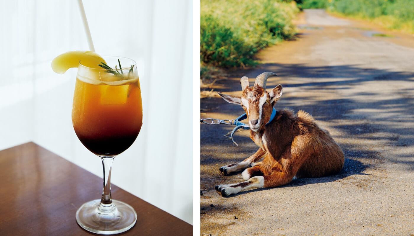 (左)〈カナンコーヒー&ベイクストア〉のエチオピアのエスプレッソを使った「エチオピアと桃のソーダ」¥600。(右)小浜島の集落で休憩中の黒ヤギと出会う。