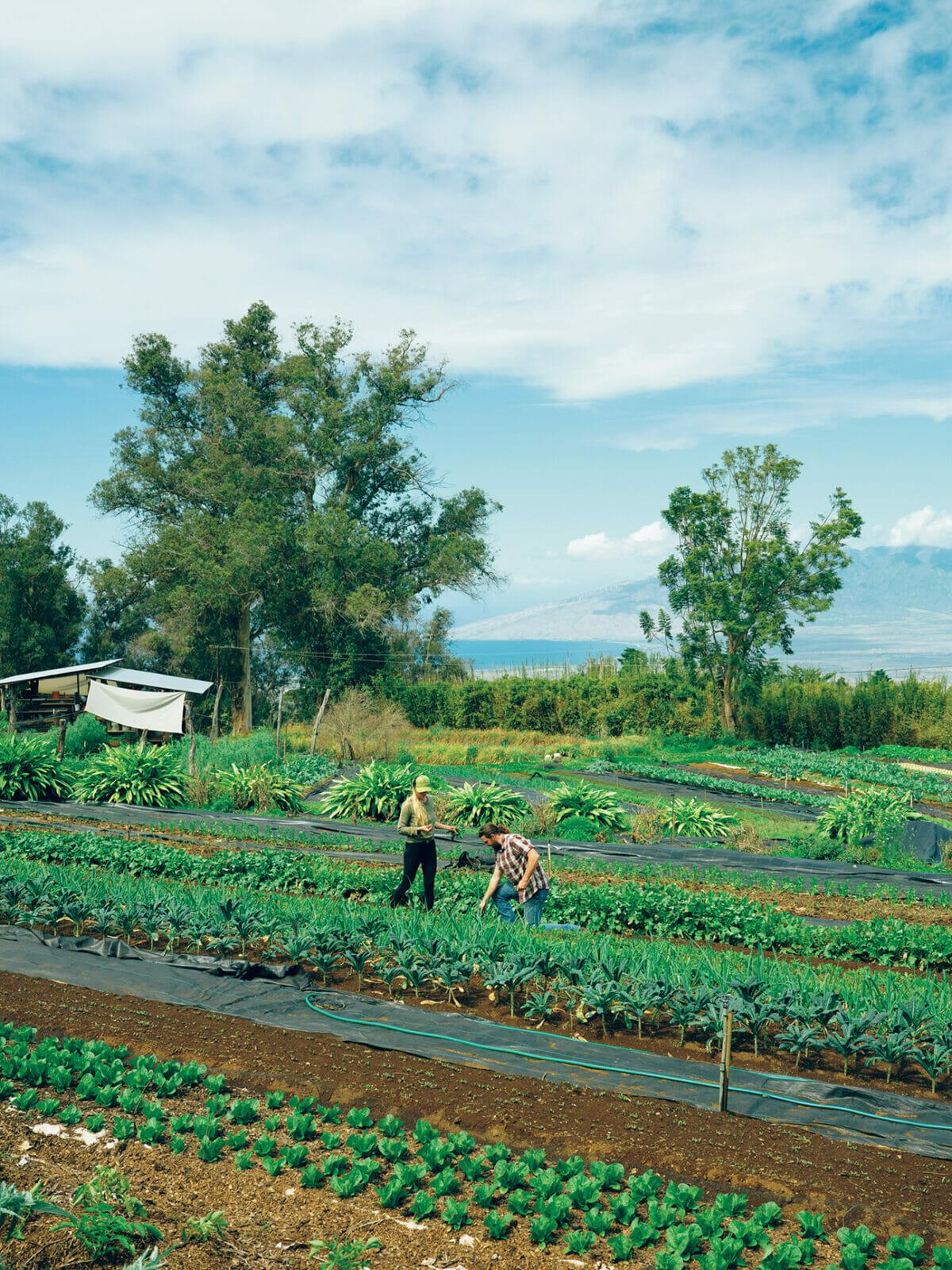 有機農法にこだわったオオ・ファーム