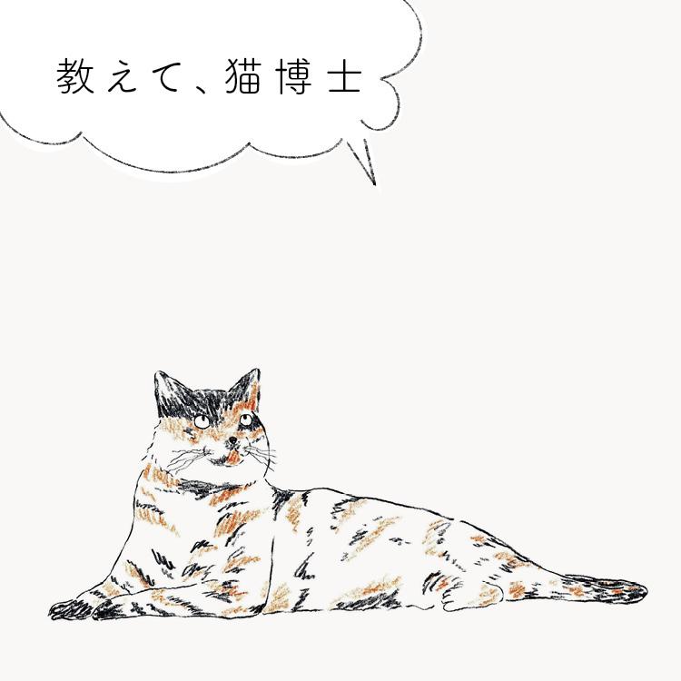 猫 質問 悩み