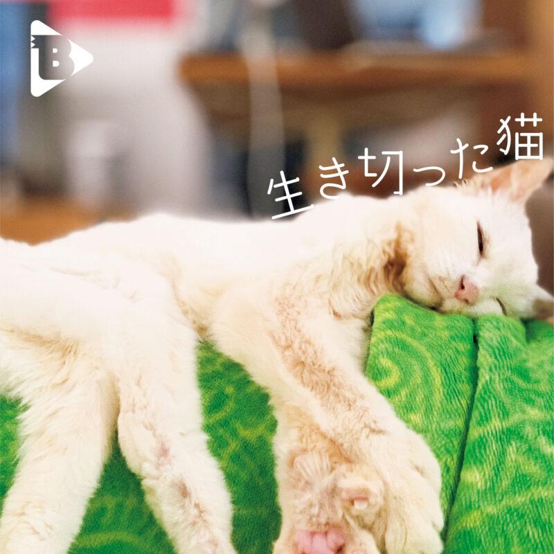デイリーブルータス表紙 生き切った猫