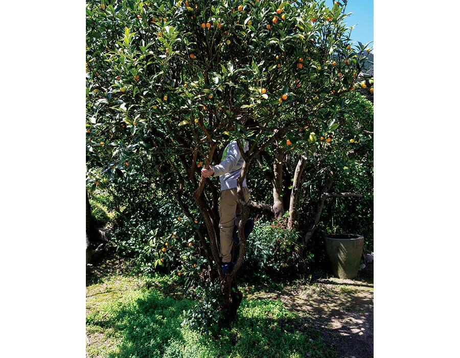 温暖な天草には果樹がたくさん。冬から春は柑橘が旬で、黄色の実をつけた木を山のあちこちや家々の庭先で見ることができる。子供たちにとっては、周囲の自然すべてが遊び場。