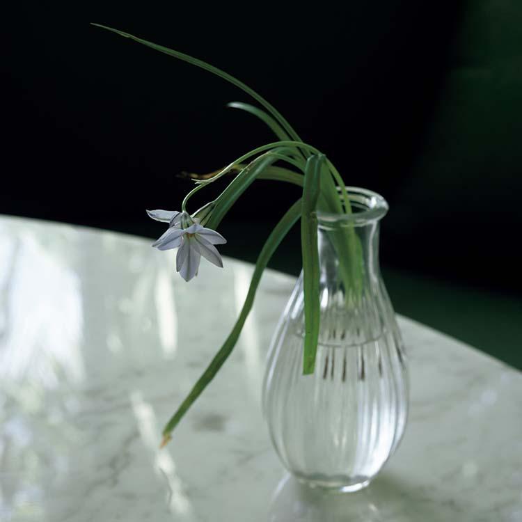 上田義彦が好きな花
