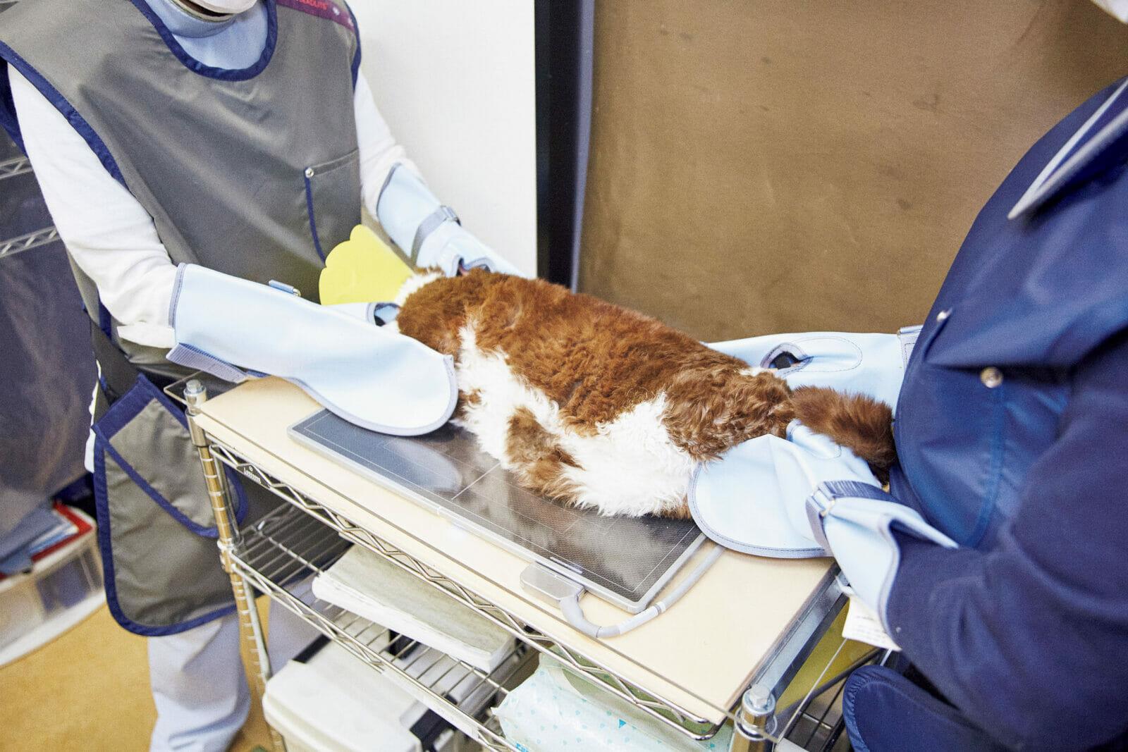 お腹側と体の横側を撮る胸やお腹などをレントゲン撮影。「肝臓の形、胃、腸、異常なし。膀胱、腎臓も問題なし。腰の骨、股関節も大丈夫。あえて言うなら内臓脂肪がちょっとついてるかな」と先生