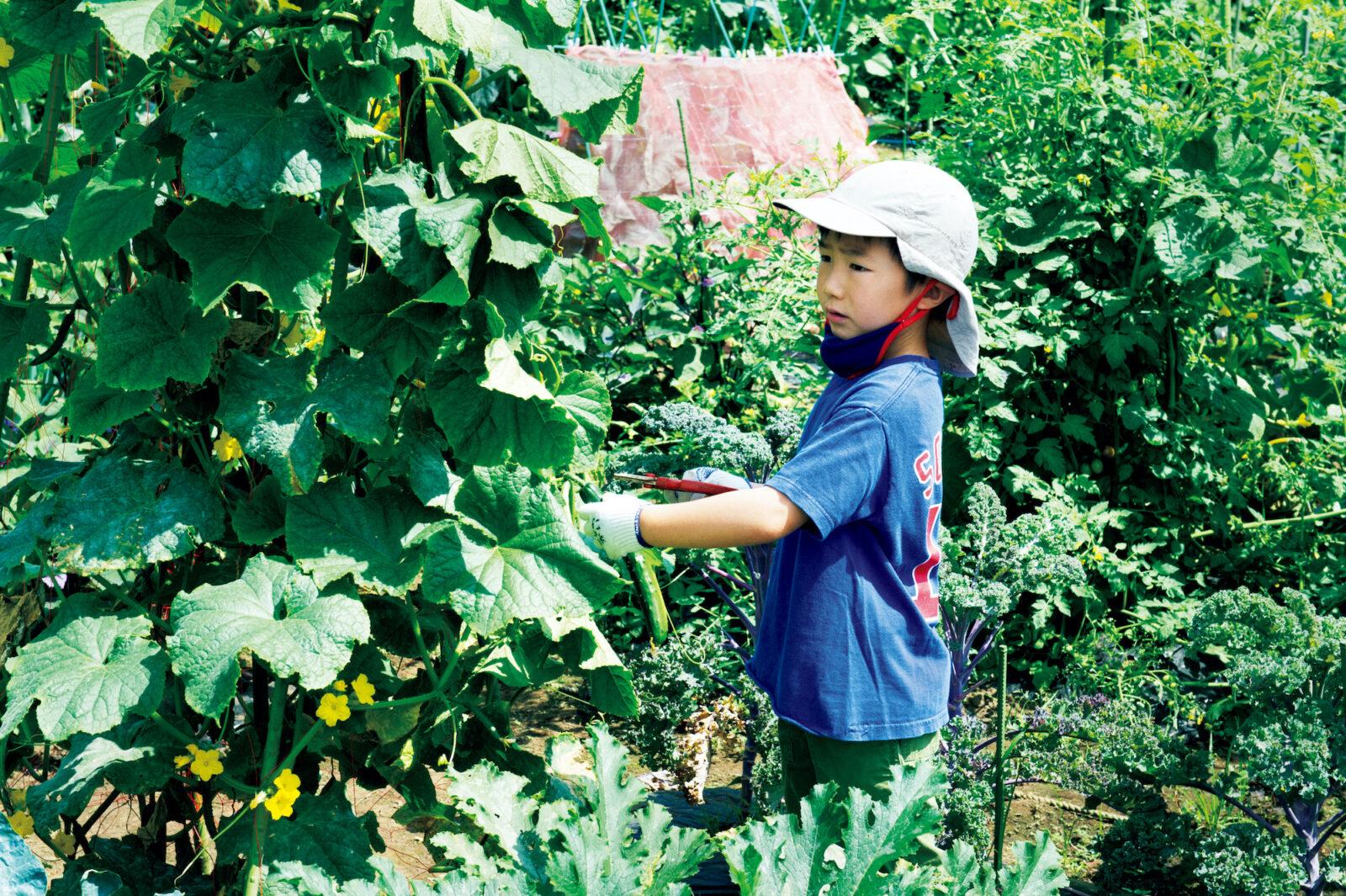 ふだんは夫妻で管理し、収穫時は子供たちも参加する。