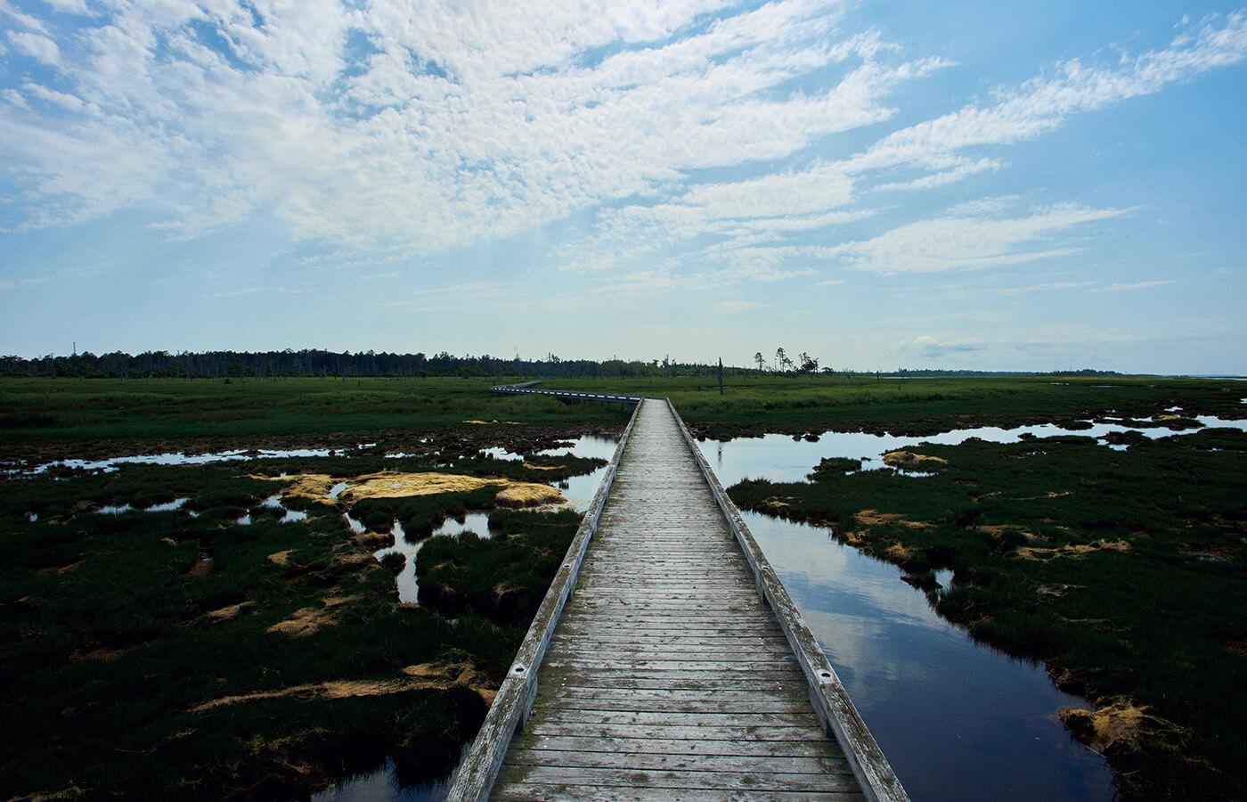 ラムサール条約登録湿地、春国岱と風蓮湖。砂が堆積した陸地である春国岱と、野鳥や動物たちの楽園、風蓮湖。オオハクチョウ、タンチョウ、オオワシ、オジロワシ、シマフクロウといった稀少な野鳥も多く暮らしている。