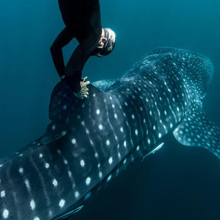 ロレックス ナショナルジオグラフィック 海洋