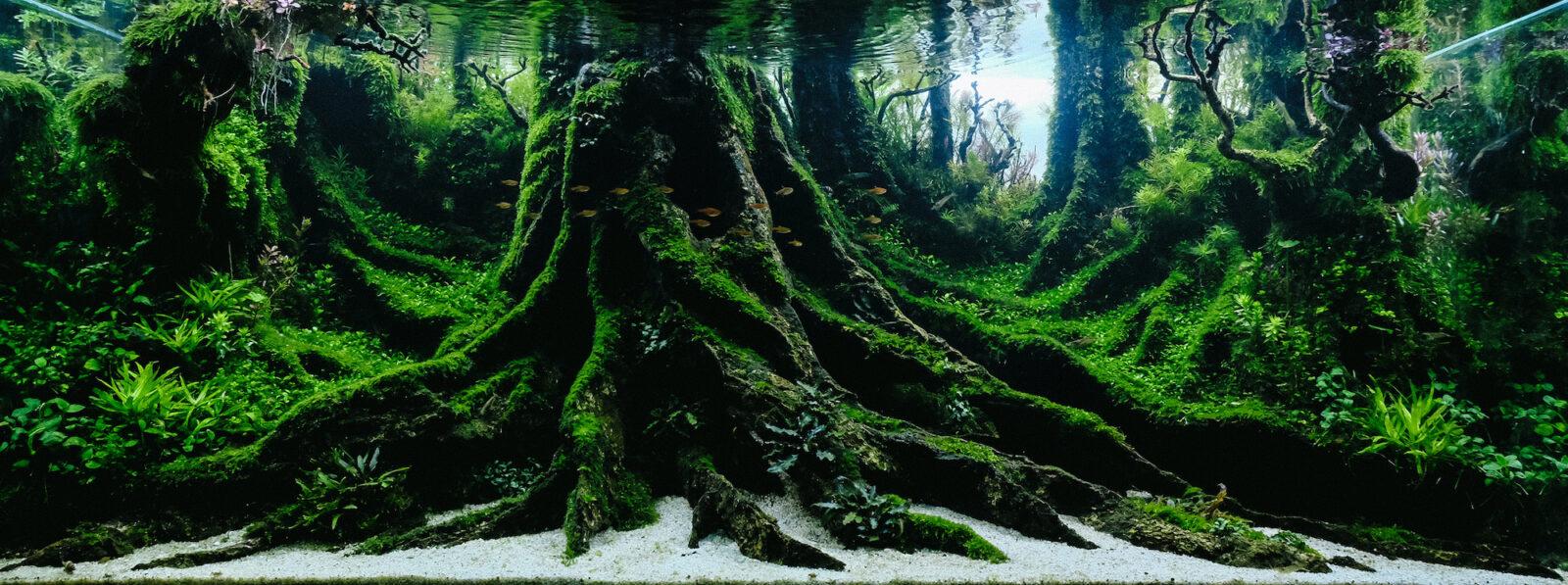 IAPLC2021 WORLD RANKING 1「Ancient Tree」 YOYO PRAYPGI/INDONESIA。
