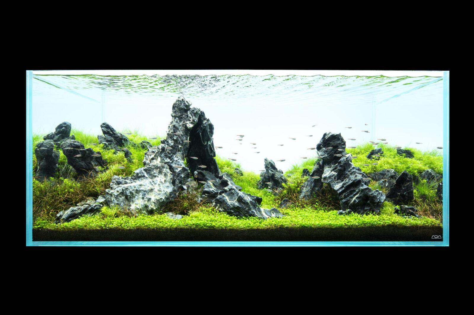 NATURE AQUARIUM EXHIBITION 2021 TOKYO ADA水景クリエイター 内田 成氏の作品「支え石」