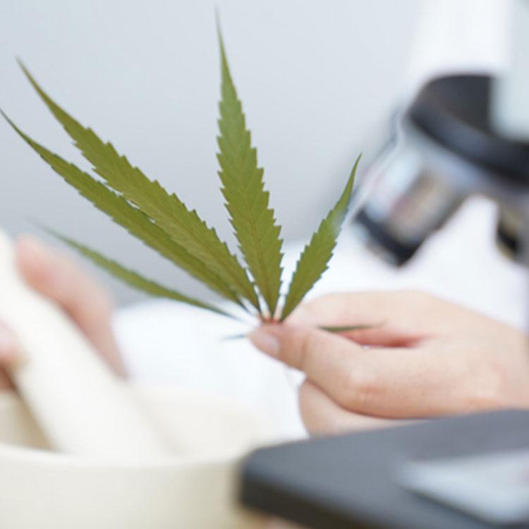 大麻 cbd カンナビジオイル ヘンプ