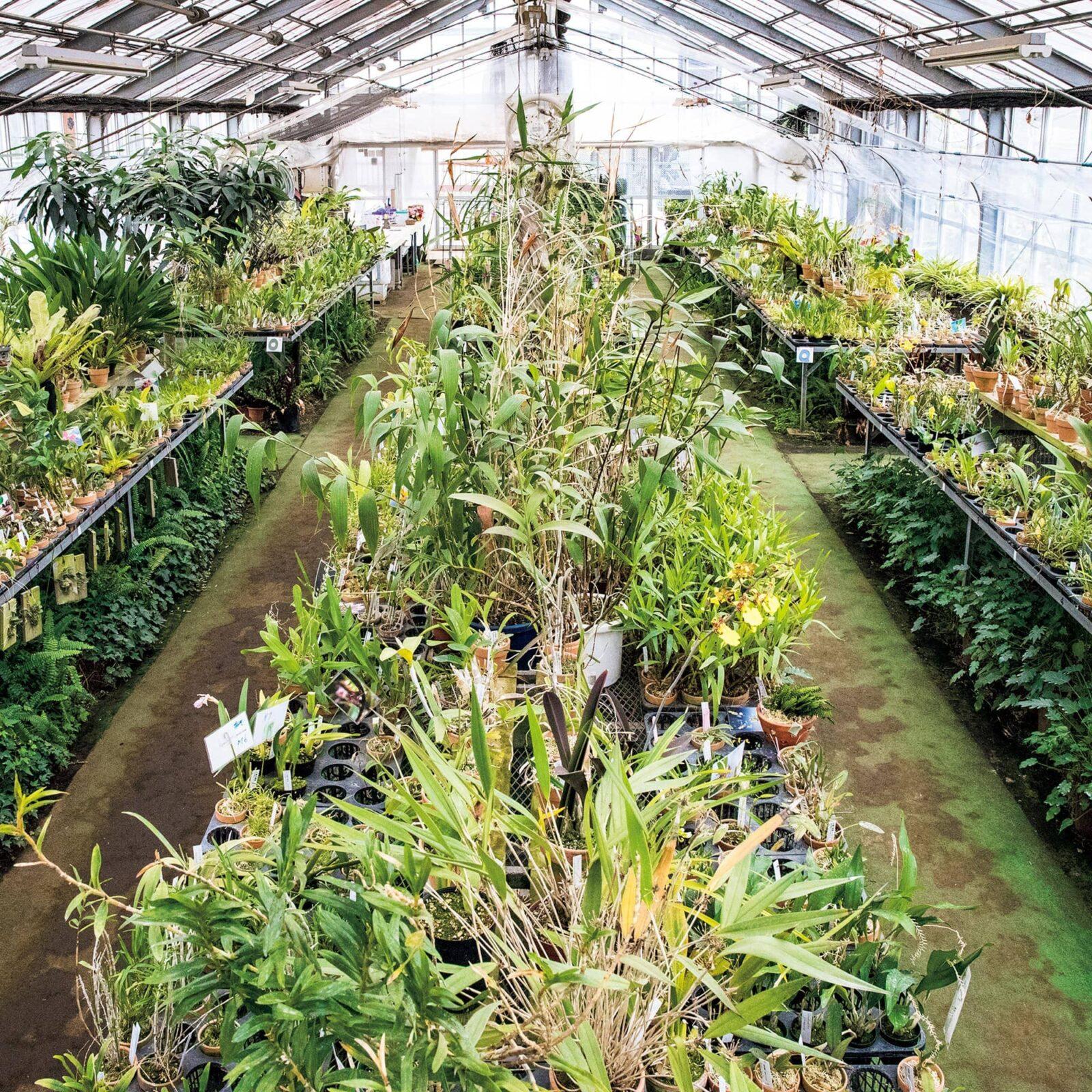 ハウス内には蘭を中心に、ティランジアや多肉植物が並ぶ。