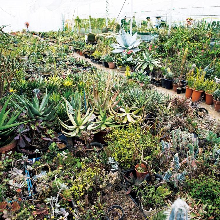 珍奇植物 グランカクタス