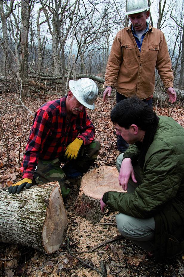 樽(カスク)は最適なホワイトオークの木を使用。年輪の数にまでこだわって原木を選りすぐる。